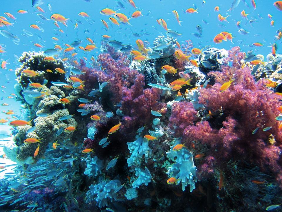 Korall, Nagy-korallzátony