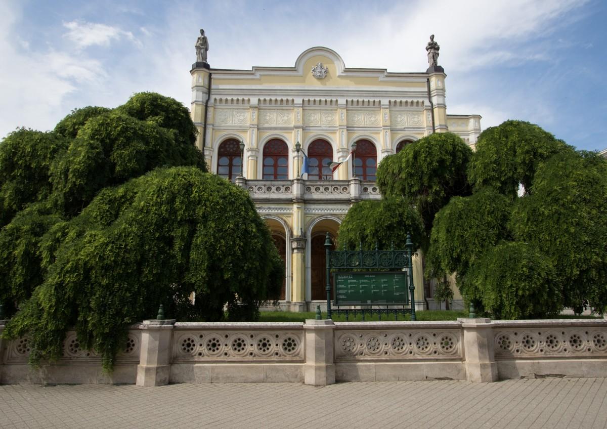 Debreceni japánakác - az év fája